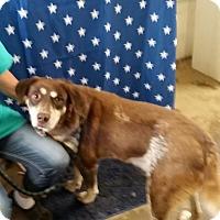 Adopt A Pet :: Dot Dot - Walthill, NE