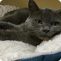 Adopt A Pet :: Blair - Wilmington, DE
