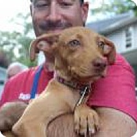 Adopt A Pet :: DAISY - Marlton, NJ