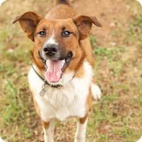 Adopt A Pet :: Maverick - Plainfield, CT
