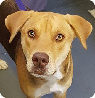 Hound (Unknown Type) Mix Dog for adoption in Tucson, Arizona - BELLA