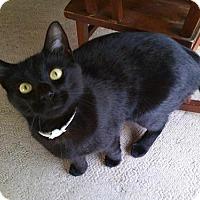 Adopt A Pet :: Jasper - Somerville, MA