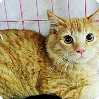 Adopt A Pet :: Colby - Castro Valley, CA
