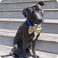 Adopt A Pet :: Jace - Blountstown, FL