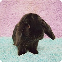Adopt A Pet :: Jenny - Fountain Valley, CA