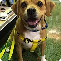 Adopt A Pet :: Rex - Ft. Lauderdale, FL