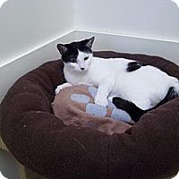 Adopt A Pet :: Dottie - Milwaukee, WI