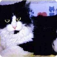 Adopt A Pet :: Becks - Medway, MA