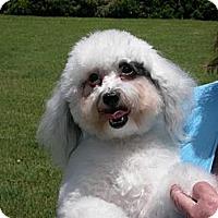 Adopt A Pet :: Frosty - Waller, TX