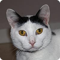 Adopt A Pet :: Barry - North Branford, CT