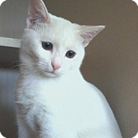 Adopt A Pet :: Jack Frost - Arlington, VA