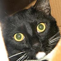 Adopt A Pet :: Oreo - Los Angeles, CA