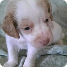 Adopt A Pet :: RaeRae2
