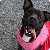 Adopt A Pet :: KONDRA - Atlanta, GA