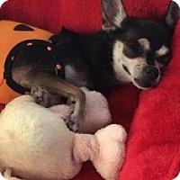 Adopt A Pet :: Lita - Mesa, AZ
