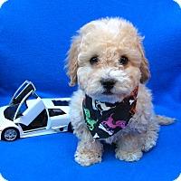 Adopt A Pet :: Moe - Irvine, CA