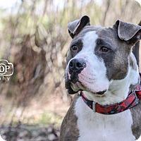 Adopt A Pet :: Fraiser - Mansfield, OH