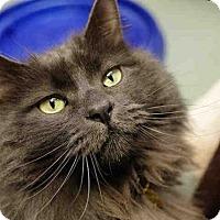 Adopt A Pet :: THOR - Denver, CO