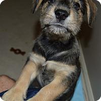 Adopt A Pet :: Reid - Memphis, TN