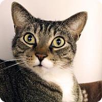 Adopt A Pet :: Jasper - Bellevue, WA