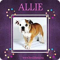 Adopt A Pet :: Allie - Alabaster, AL