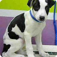 Adopt A Pet :: Rylie-ADOPTION PENDING - Boulder, CO