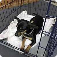 Adopt A Pet :: Woody - Tavares, FL