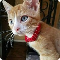 Adopt A Pet :: O'Malley - Rowlett, TX