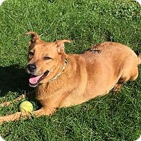 Adopt A Pet :: Pepita - Chicago, IL