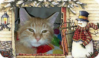 Domestic Mediumhair Cat for adoption in Winterville, North Carolina - LEO
