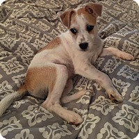 Adopt A Pet :: Jewell - Albemarle, NC