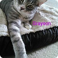 Adopt A Pet :: Grayson - McConnells, SC
