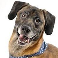 Adopt A Pet :: Emmett - Amelia, OH