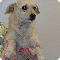 Adopt A Pet :: Stef - Wildomar, CA