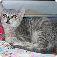 Adopt A Pet :: Bernadine - Rochester, MN