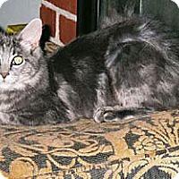 Adopt A Pet :: Anya - Alamo, CA