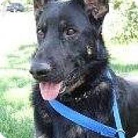 Adopt A Pet :: Sissy - Atascadero, CA