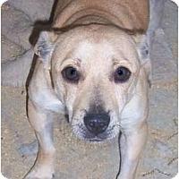 Adopt A Pet :: Rosanne - Templeton, CA