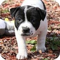 Adopt A Pet :: Sage Kotsenberg - Austin, TX