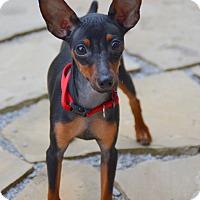 Adopt A Pet :: Tyrion - Nashville, TN