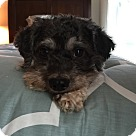 Adopt A Pet :: Bootsie