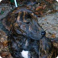 Adopt A Pet :: Finn - Stamford, CT