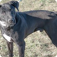 Adopt A Pet :: Cheesecake - Gainesville, FL