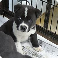 Adopt A Pet :: Banks - Philadelphia, PA