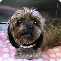 Adopt A Pet :: I'M ADOPTED Zuzu Russo - Oswego, IL