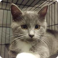 Adopt A Pet :: Kylie - Brainardsville, NY