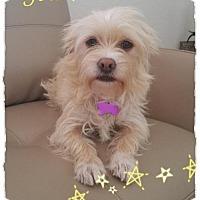 Adopt A Pet :: Nina - Deerfield Beach, FL