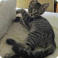 Adopt A Pet :: JAY - detroit, MI