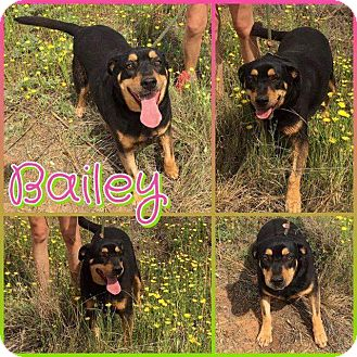 Terrier (Unknown Type, Small) Dog for adoption in Big Spring, Texas - Bailey