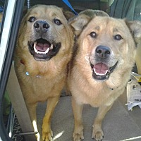 Adopt A Pet :: TEDDY & CANDY - Van Nuys, CA